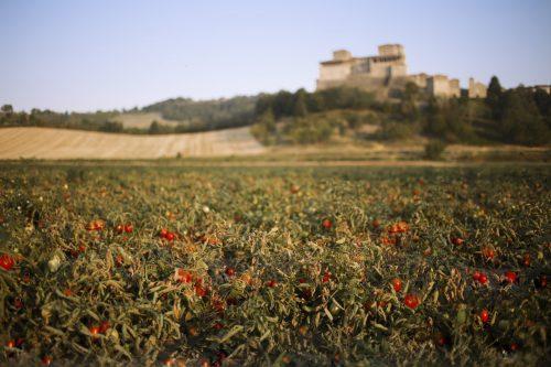 Unsere italienischen Tomatensorten und deren Anbaugebiete